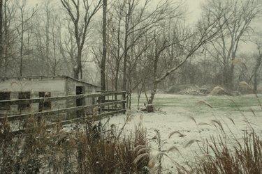 Snowyyard3
